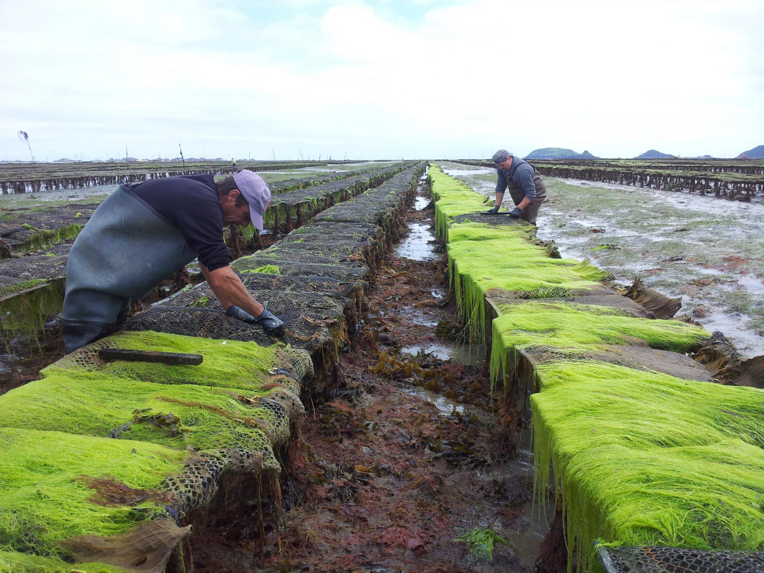 Certifying environmentally and socially responsible seafood
