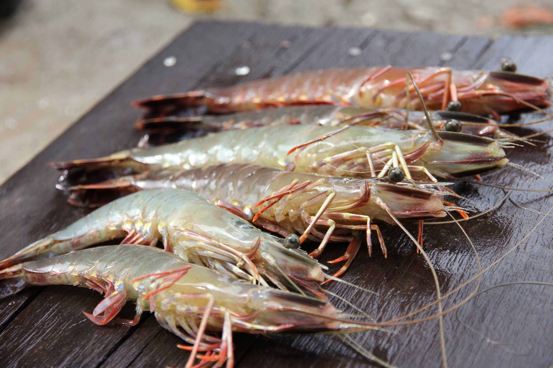 Shrimp - Aquaculture Stewardship Council