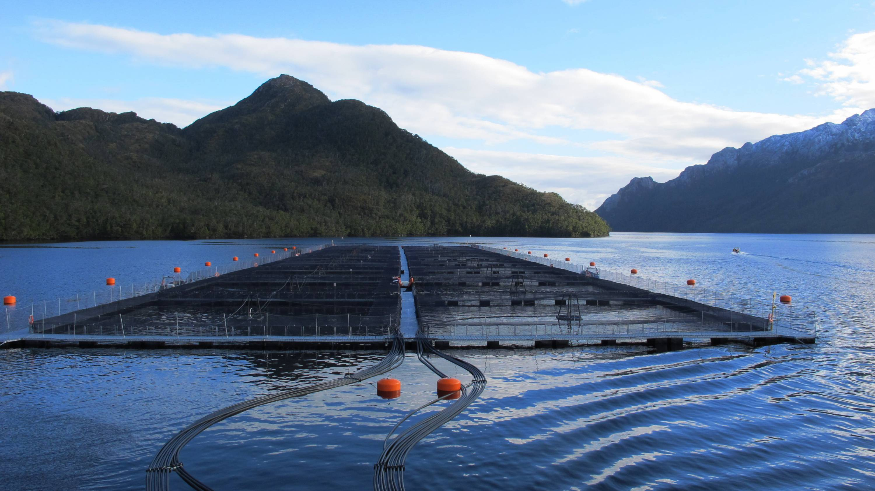 Salmon pens in the Antarctic ocean with mountains in the background