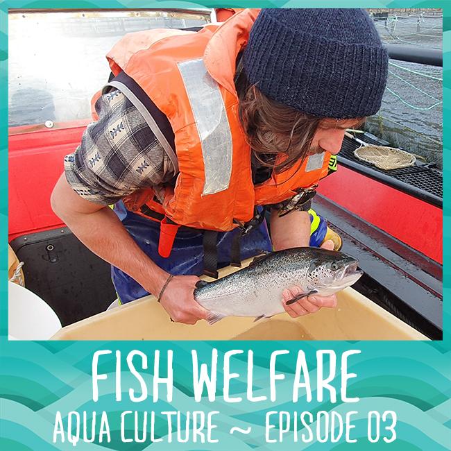 Fish Welfare - Aqua Culture